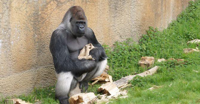 beveiliging dierentuin