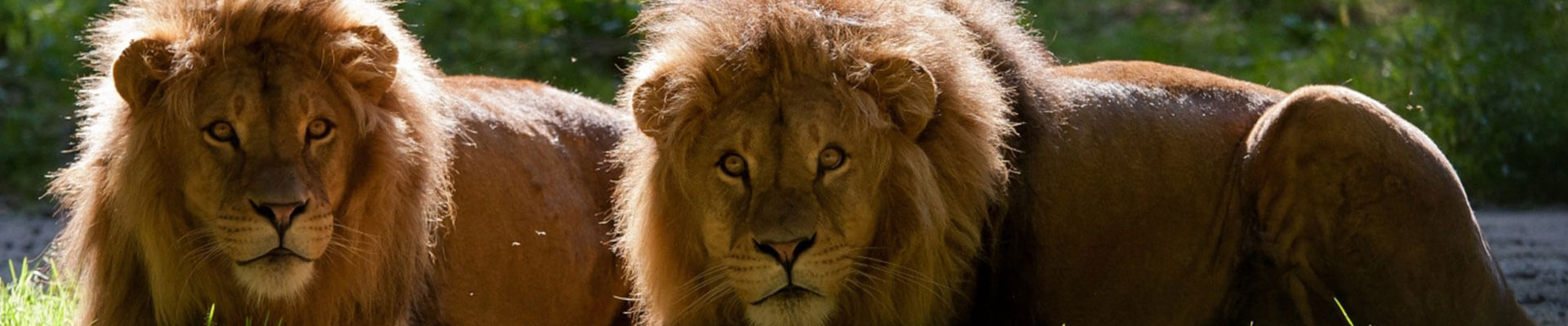 leeuwen banner