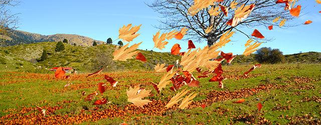 bladeren achtergrond
